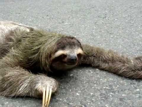 mental burnout sloth